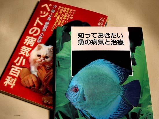 熱帯魚の病気3.jpg